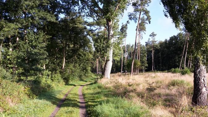 Bei angenehmer Morgenfrische durch den Wald
