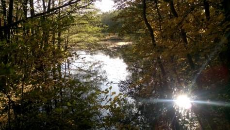 Ein Teich in den Pinnauwiesen bei Henstedt-Ulzburg spiegelt die letzten Sonnenstrahlen des Tages.