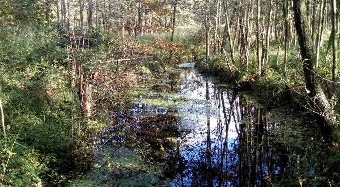 Pinnau bei Henstedt-Ulzburg im Herbst