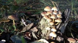 Rausgehen und die Schätze des Herbstes entdecken