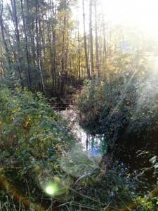 Herbstsonne über den Pinnauwiesen bei Henstedt Ulzburg