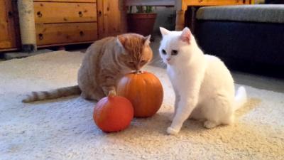 Drei ... äh ... nein, ZWEI Kürbisse, Herr Pommes Schmitt und y.t. - die Vorbereitungen für Halloween können beginnen.